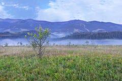 Eine grüne Wiese und ein wachsender junger Baum auf einem Hügel im Hintergrund von Karpatenbergen am frühen Morgen Lizenzfreies Stockbild