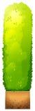 Eine grüne Zierpflanze Lizenzfreies Stockbild