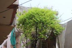 Eine grünliche Baumstellung hoch lizenzfreies stockfoto