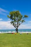 Eine große Baumansicht am Tag des blauen Himmels Stockfotografie
