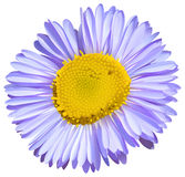Eine große Blume Stockbild