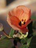 Eine große rote Blume stockbilder