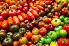 Eine große Vielfalt der Tomate Stockfotografie