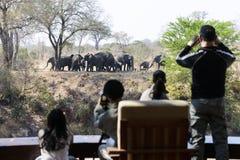 Eine Gruppe afrikanische Elefanten stockfotos