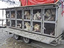 Eine Gruppe der Hunde Lizenzfreie Stockfotos