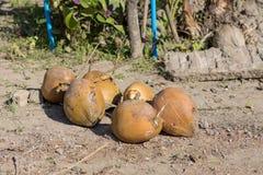 Eine Gruppe der Kokosnüsse stockbild