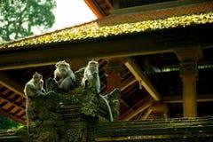 Eine Gruppe des Affen am heiligen Affe-Schongebiet-Tempel, Ubud, Indonesien Lizenzfreie Stockfotos