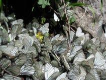 Eine Gruppe des Schmetterlingshintergrundes lizenzfreies stockfoto