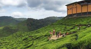 Eine Gruppe des touristischen nehmenden Bildes am Teebauernhof stockbilder