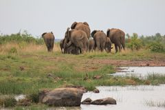 Eine Gruppe Elefanten Lizenzfreie Stockfotografie