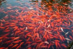 Eine Gruppe Fische Lizenzfreie Stockfotos