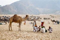 Kamel angemessen, Pushkar Indien lizenzfreie stockfotografie