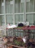 Eine Gruppe Kaninchen lizenzfreie stockbilder