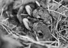 Eine Gruppe neugeborene Kaninchen auf einem Bauernhof stockfotografie