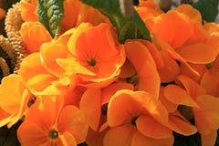 Eine Gruppe orange Blumen im Garten Stockfotos