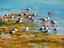 Eine Gruppe Seemöwen auf einem moosigen Ufer stockbild