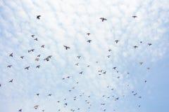 Eine Gruppe Tauben Stockfotos
