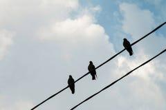 Eine Gruppe Tauben auf einer Stromleitung Lizenzfreie Stockfotografie