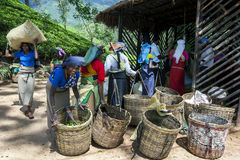 Eine Gruppe Teepflücker warten, um ihre Morgenernte von den Blättern zu haben, die nahe Adams-Spitze in Sri Lanka gewogen werden Lizenzfreie Stockbilder