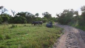 Eine Gruppe von fünf Nashörnern stock video