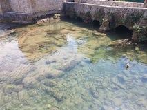 Eine Gruppe von Fischen fand in den Wasserfällen von Krka Kroatien Lizenzfreies Stockfoto