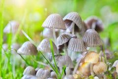 Eine Gruppe von Pilzen Stockfoto