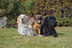 Eine Gruppe von vier Hunden der unterschiedlichen Zucht stockfotos