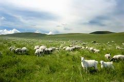 Eine Gruppe Ziegen lizenzfreies stockfoto