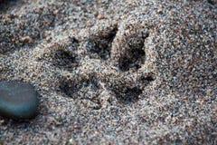Eine gut-Druckbahn eines Hundes oder des wilden Tieres auf dem sandigen Ufer des Sees Stockfotografie