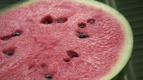 Eine Hälfte frisches rohes exotisches tropisches thailändisches Frucht watermeloncitrullus wolligen Drehens auf Bananenblatt stock video