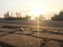 Eine hölzerne Stocklüge vor dem Sonnenuntergang über dem Himmel lizenzfreies stockfoto