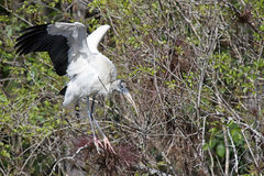 Eine hölzerner Storch-Landung Stockfoto