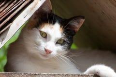 Eine hübsche Katze unter Abdeckung Stockbild
