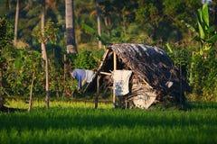 Eine Hütte auf einem Paddy-Feld lizenzfreies stockfoto