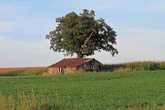 Eine Halle auf einem Bauernhof-Gebiet lizenzfreie stockbilder