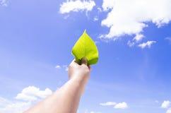 Eine Hand, die Blatt mit Hintergrund des blauen Himmels hält Stockbild