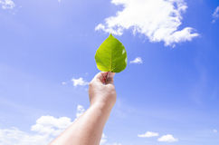 Eine Hand, die Blatt mit Hintergrund des blauen Himmels hält Lizenzfreies Stockfoto