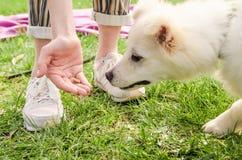 Eine Hand, die den Hund einzieht lizenzfreie stockfotos