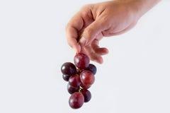 Eine Hand, die eine Gruppe Trauben hält stockbild