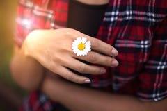 Eine Hand hält eine Blume bei Sonnenuntergang auf Natur draußen, ein Gänseblümchen im Vorfrühling lizenzfreies stockbild