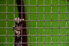 Eine Hand ist hinter Gittern ein Begriffsfoto der Knechtschaft lizenzfreie stockbilder
