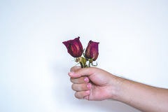 Eine Hand mit einer roten Rose Lizenzfreies Stockbild