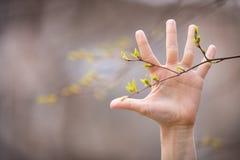 Eine Hand und neuer ein Frühlingsbaum verlässt in einem Waldfrühlingshintergrund Stockfoto