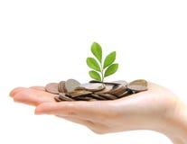 Eine Hand voll des Geldes und der Holding ein Baum Lizenzfreie Stockbilder