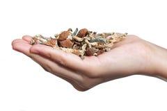 Eine Handvoll Pilze Lizenzfreie Stockbilder