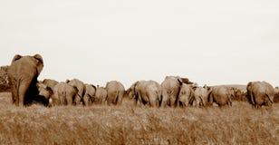 Eine Herde der Elefanten von der Rückseite Lizenzfreies Stockbild