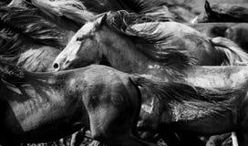 Eine Herde der jungen Pferde Stockfotos