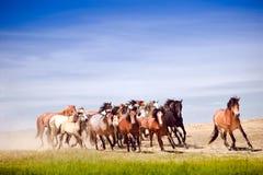 Eine Herde von den jungen Pferden sehr, die schnell laufen Lizenzfreie Stockfotos
