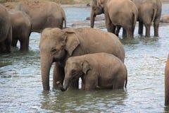 Eine Herde von Elefanten kam zur Wasserentnahmestelle stockfoto