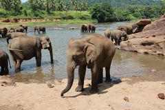Eine Herde von Elefanten kam zur Wasserentnahmestelle lizenzfreie stockfotografie